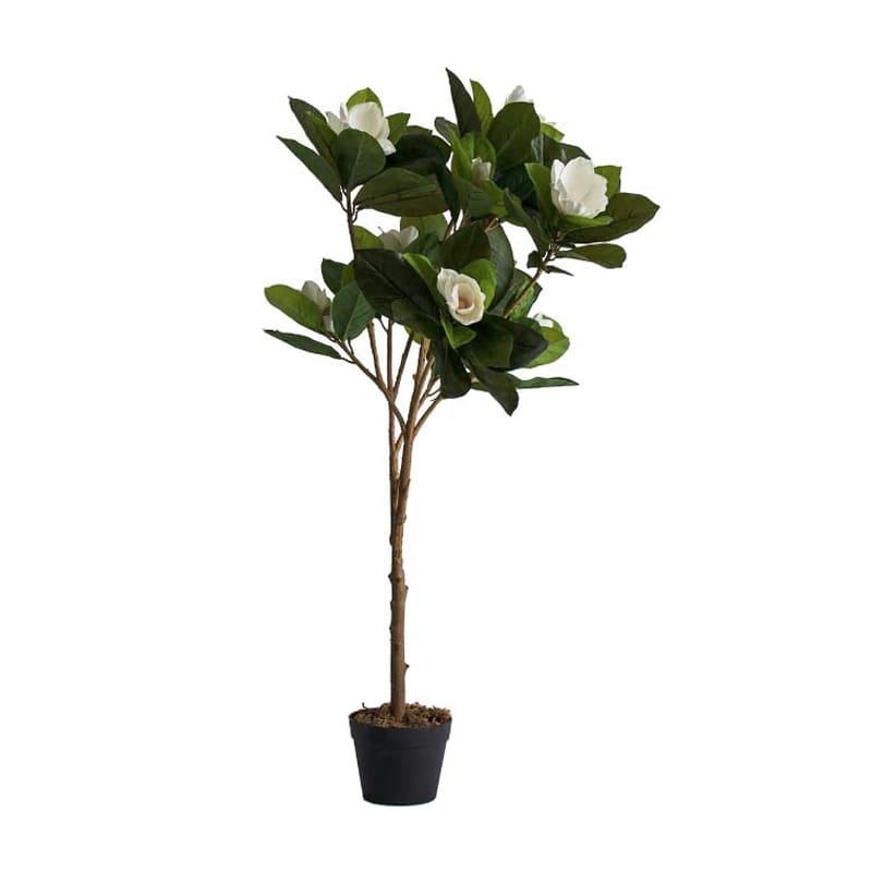 Planta Magnolia