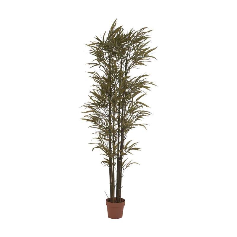 Planta Phoenix Bambu